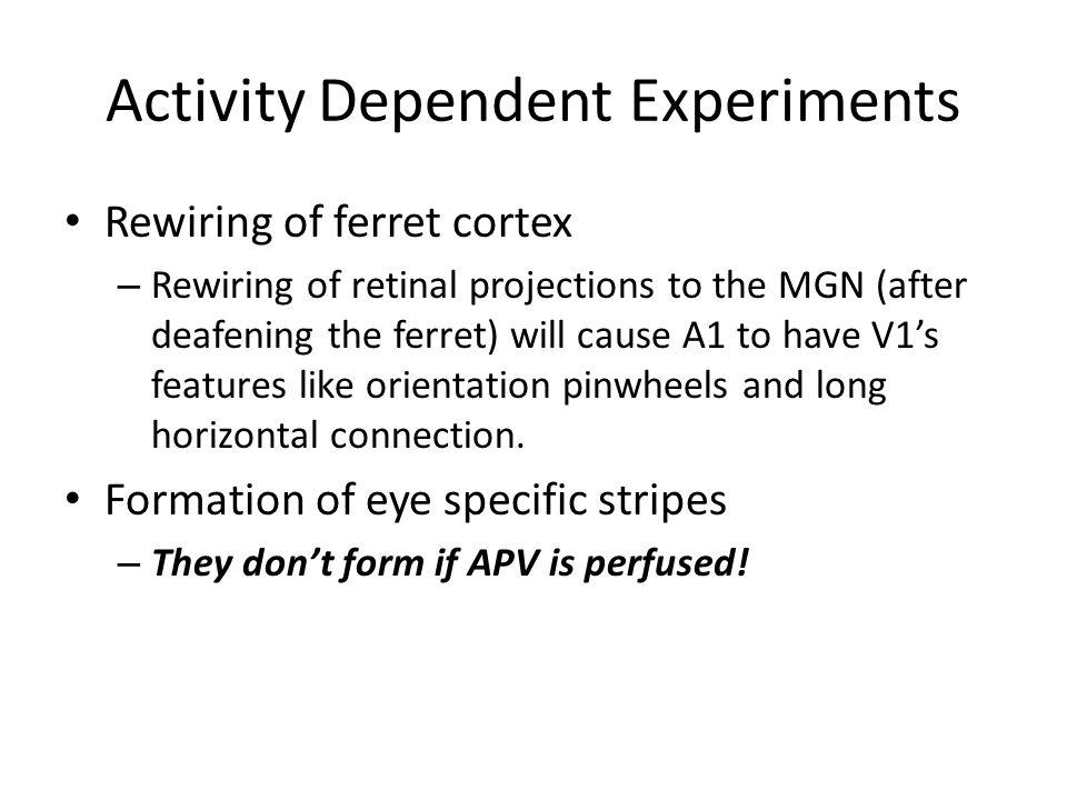 Activity Dependent Experiments