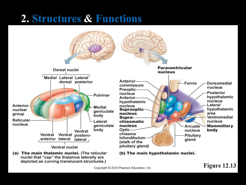 2. Structures & Functions