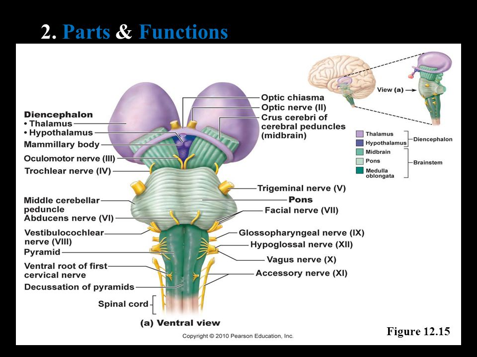 2. Parts & Functions Figure 12.15