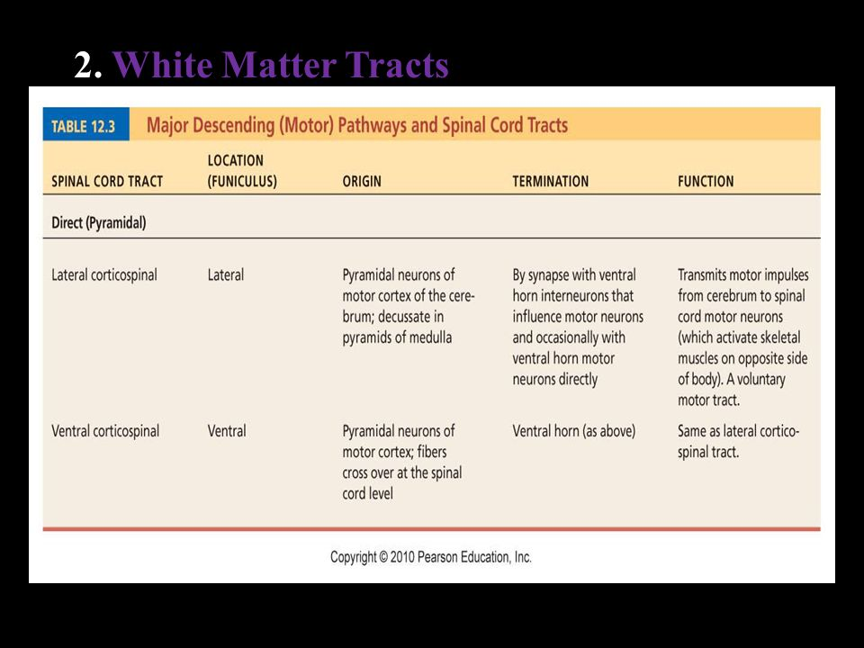 2. White Matter Tracts