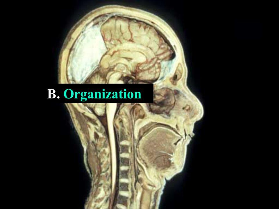 B. Organization
