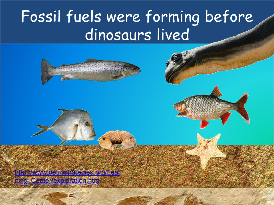 Fossil fuels were forming before dinosaurs lived
