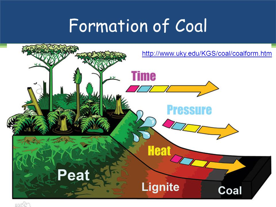 Formation of Coal http://www.uky.edu/KGS/coal/coalform.htm