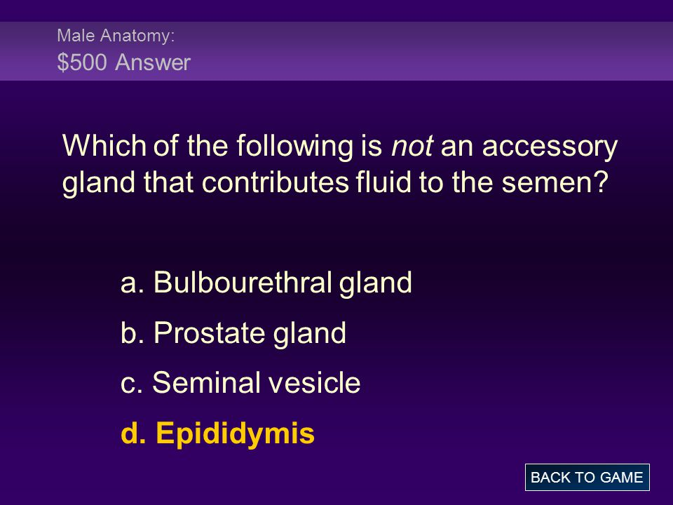 Male Anatomy: $500 Answer Which of the following is not an accessory gland that contributes fluid to the semen