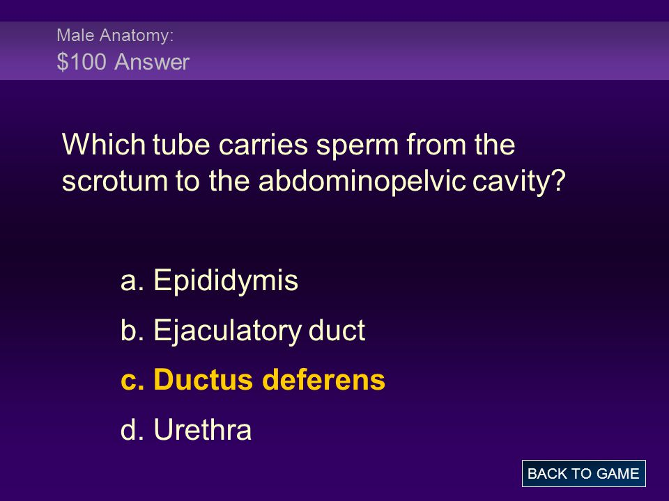 Male Anatomy: $100 Answer Which tube carries sperm from the scrotum to the abdominopelvic cavity a. Epididymis.