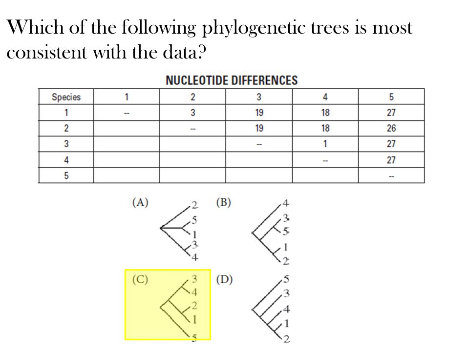 Which of the following phylogenetic trees is most consistent with the data