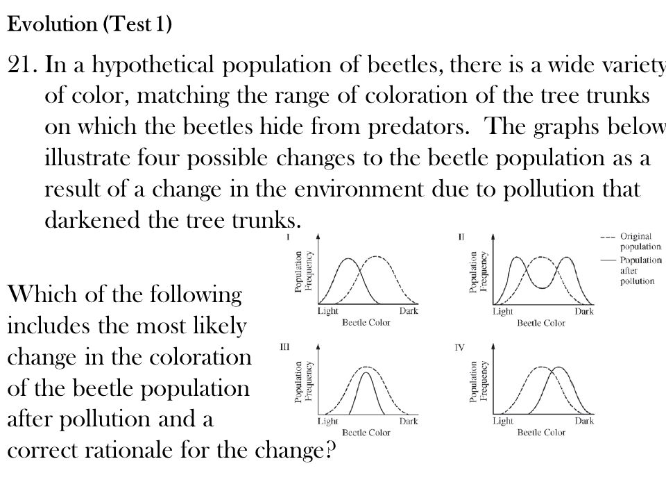 Evolution (Test 1)