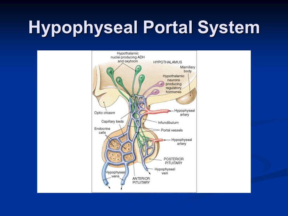 anatomy and physiology for emergency care ppt video
