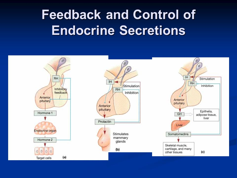 Feedback and Control of Endocrine Secretions