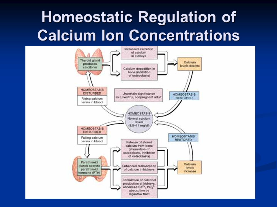Homeostatic Regulation of Calcium Ion Concentrations