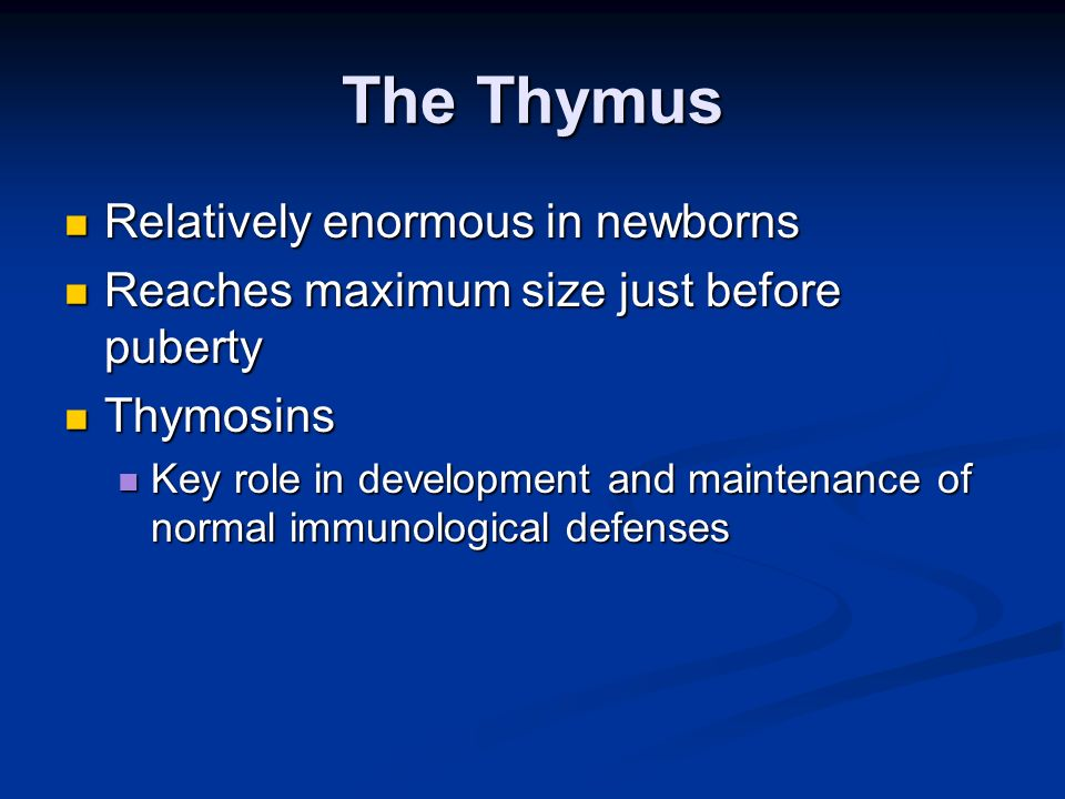 The Thymus Relatively enormous in newborns