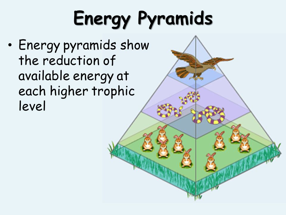 Energy Pyramids Energy pyramids show the reduction of available energy at each higher trophic level
