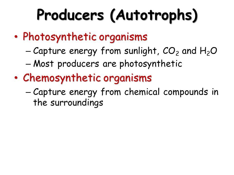 Producers (Autotrophs)
