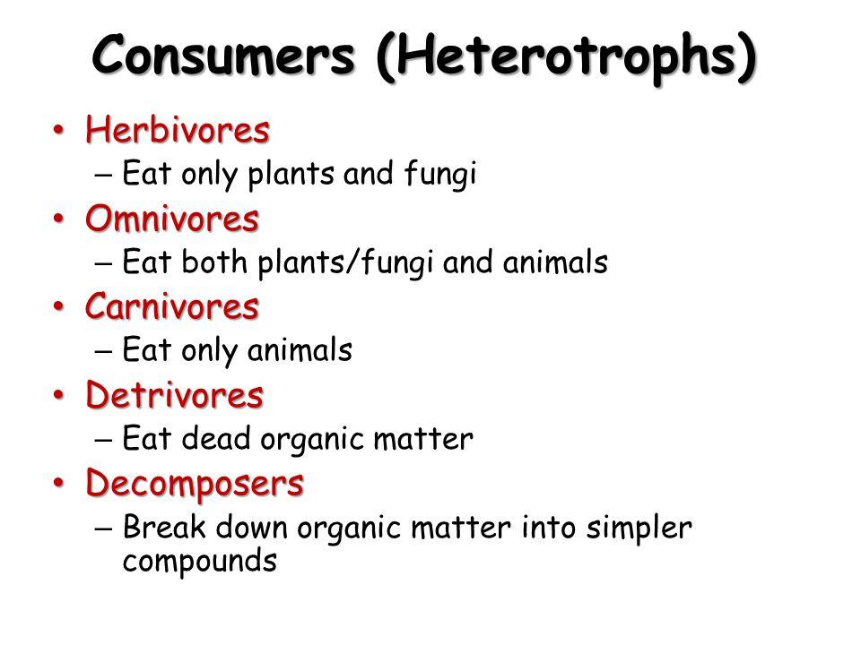 Consumers (Heterotrophs)