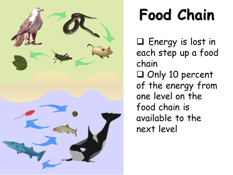 Food Chain Energy is lost in each step up a food chain