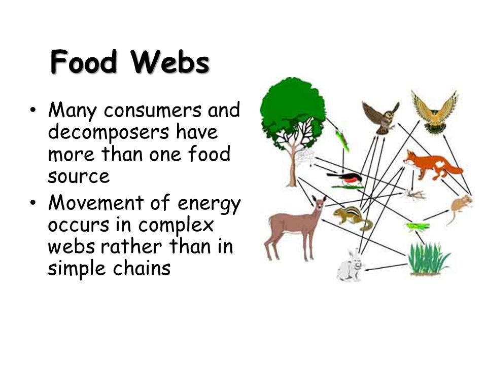 Food Webs Many consumers and decomposers have more than one food source.