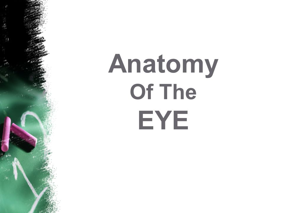 Anatomy Of The EYE This workshop is funded by the European Union