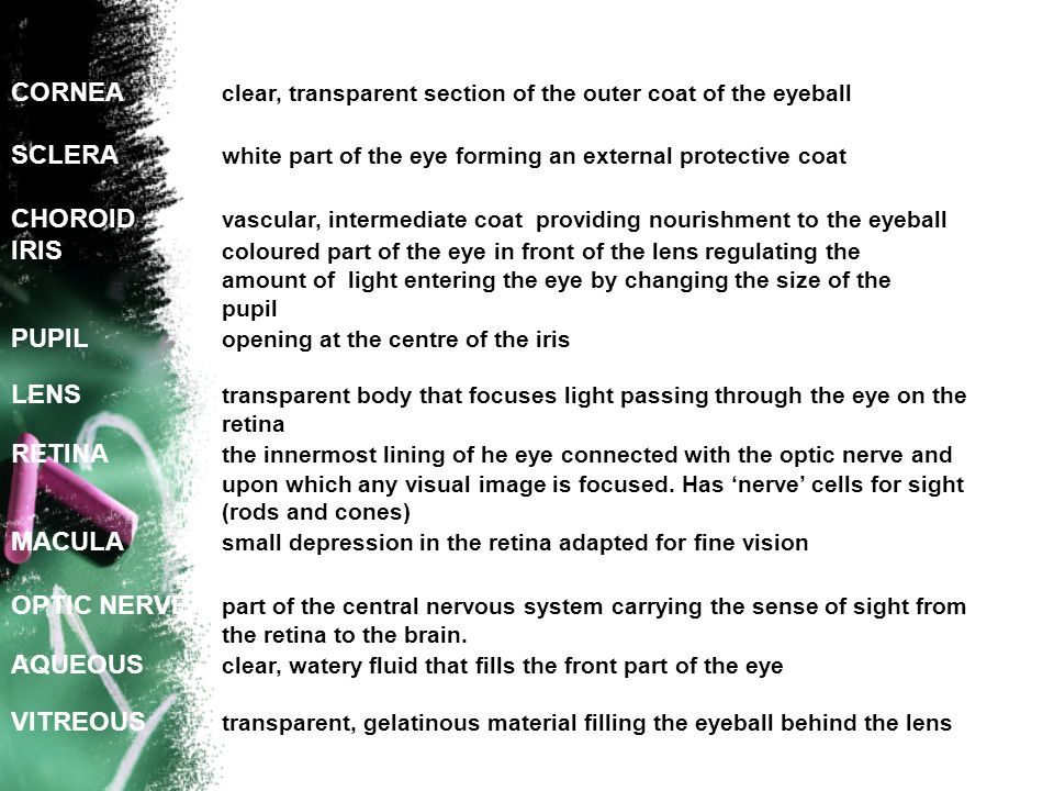 CORNEA clear, transparent section of the outer coat of the eyeball