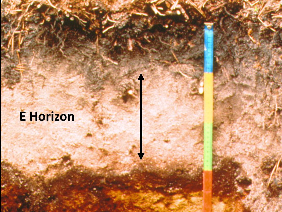 How do soils form soil profiles ppt video online download for Soil zone of accumulation