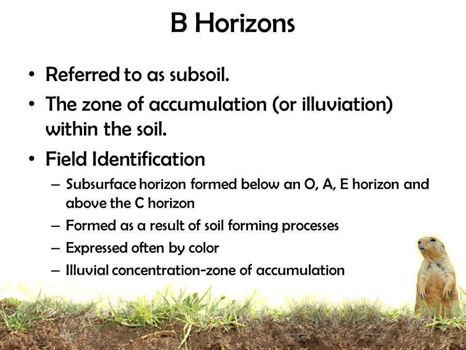 B Horizons Referred to as subsoil.