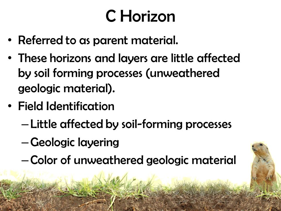 C Horizon Referred to as parent material.
