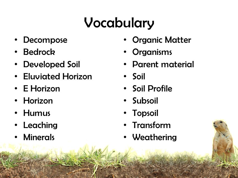 Vocabulary Decompose Bedrock Developed Soil Eluviated Horizon