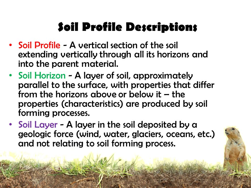 How do soils form soil profiles ppt video online download for Soil profile video