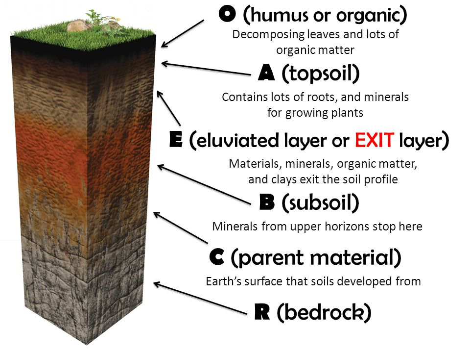 E (eluviated layer or EXIT layer)