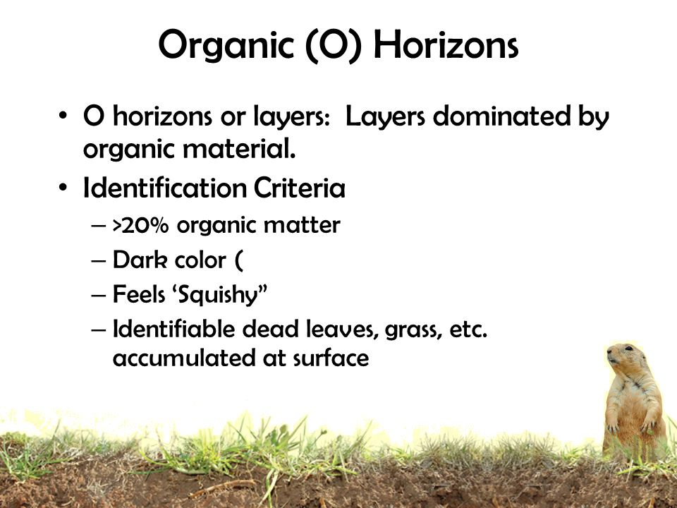 Organic (O) Horizons O horizons or layers: Layers dominated by organic material. Identification Criteria.