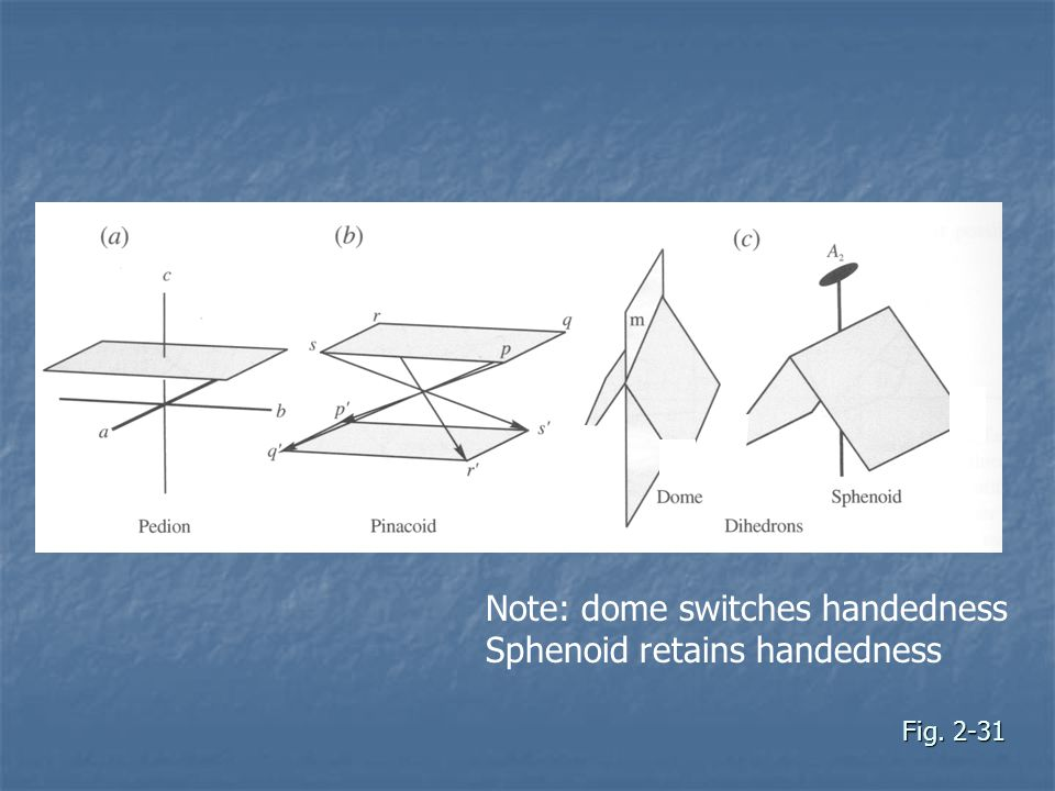 Note: dome switches handedness Sphenoid retains handedness