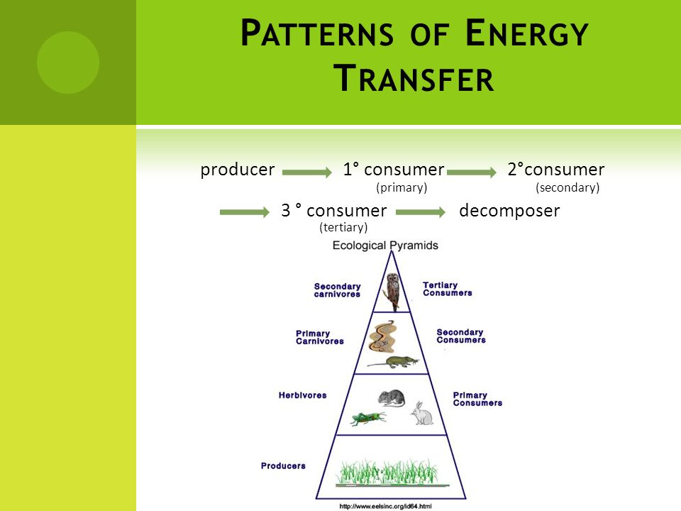 Patterns of Energy Transfer