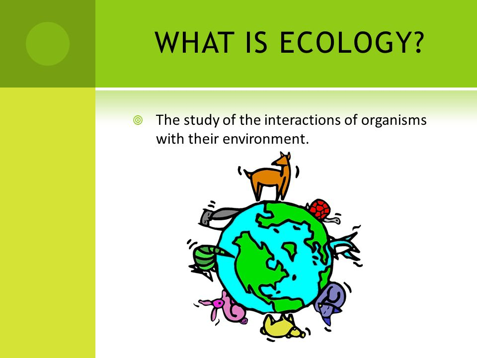 WHAT IS ECOLOGY The study of the interactions of organisms with their environment.