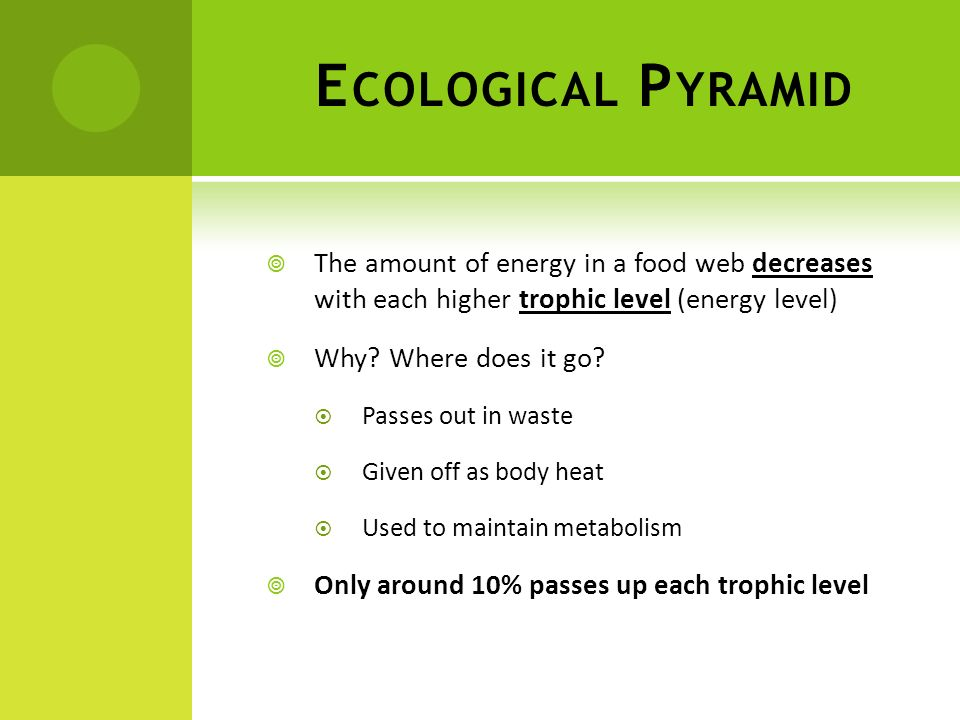 Ecological Pyramid The amount of energy in a food web decreases with each higher trophic level (energy level)