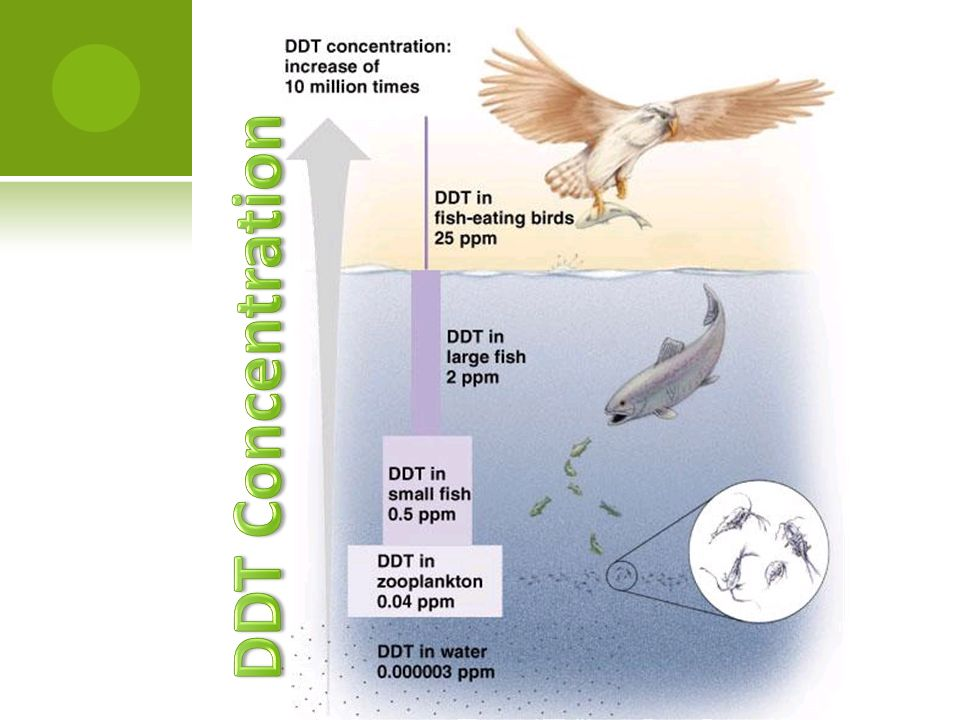 DDT Concentration