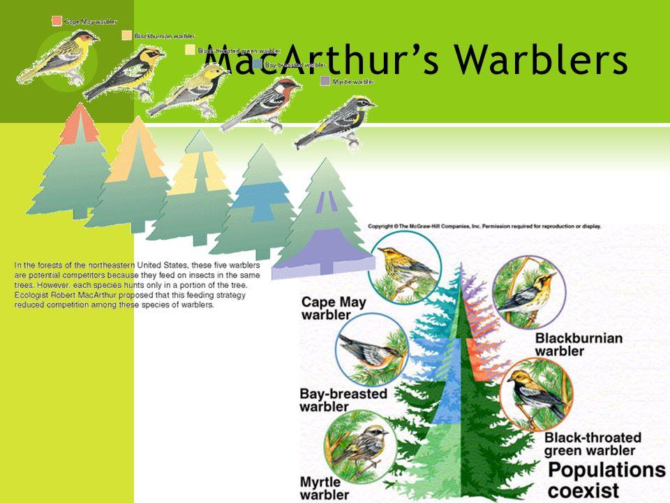 MacArthur's Warblers