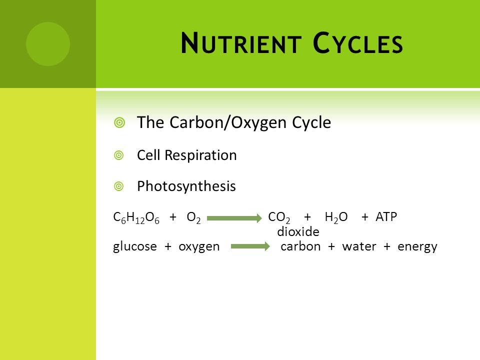 Nutrient Cycles The Carbon/Oxygen Cycle Cell Respiration