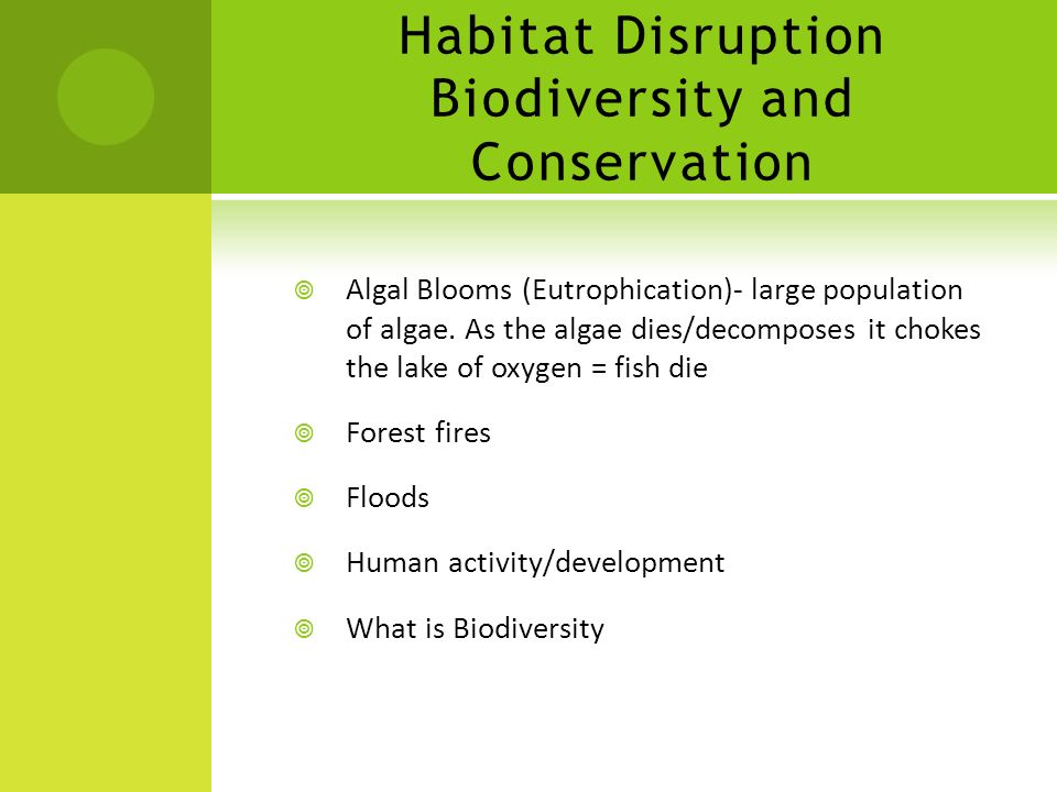 Habitat Disruption Biodiversity and Conservation
