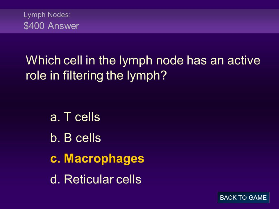 Lymph Nodes: $400 Answer Which cell in the lymph node has an active role in filtering the lymph a. T cells.