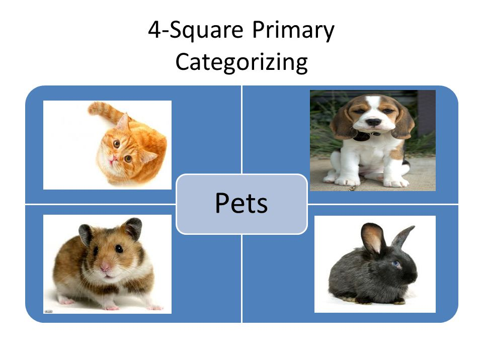 4-Square Primary Categorizing