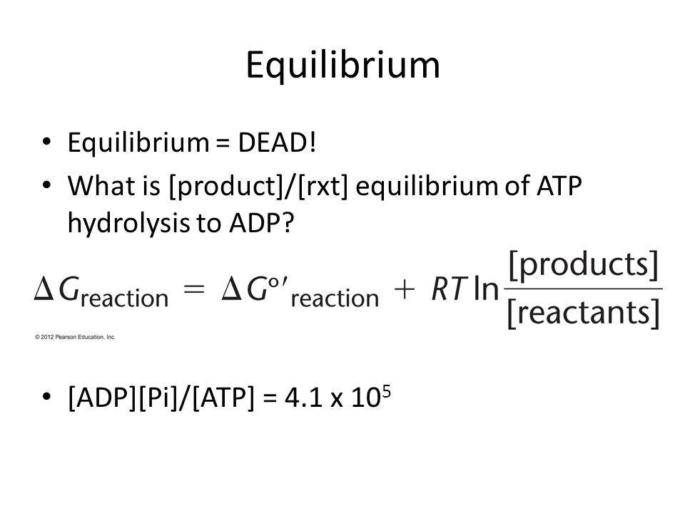 Equilibrium Equilibrium = DEAD!