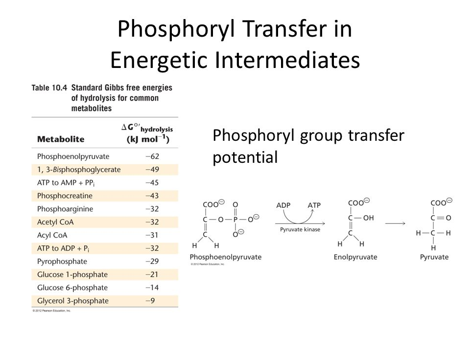 Phosphoryl Transfer in Energetic Intermediates