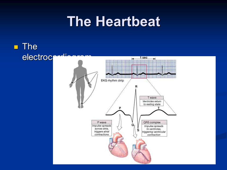 The Heartbeat The electrocardiogram
