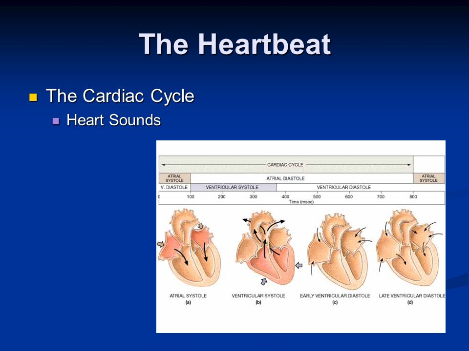 The Heartbeat The Cardiac Cycle Heart Sounds