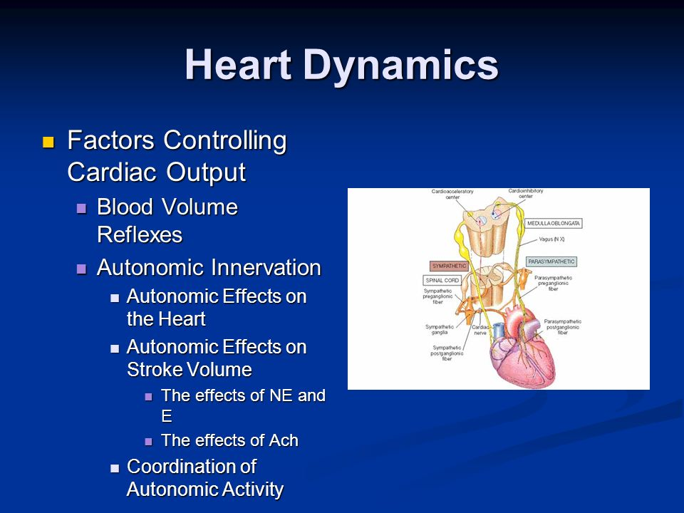 Heart Dynamics Factors Controlling Cardiac Output