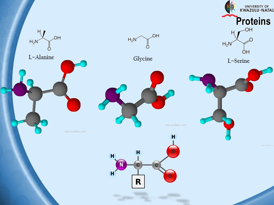 Proteins L–Alanine Glycine L–Serine