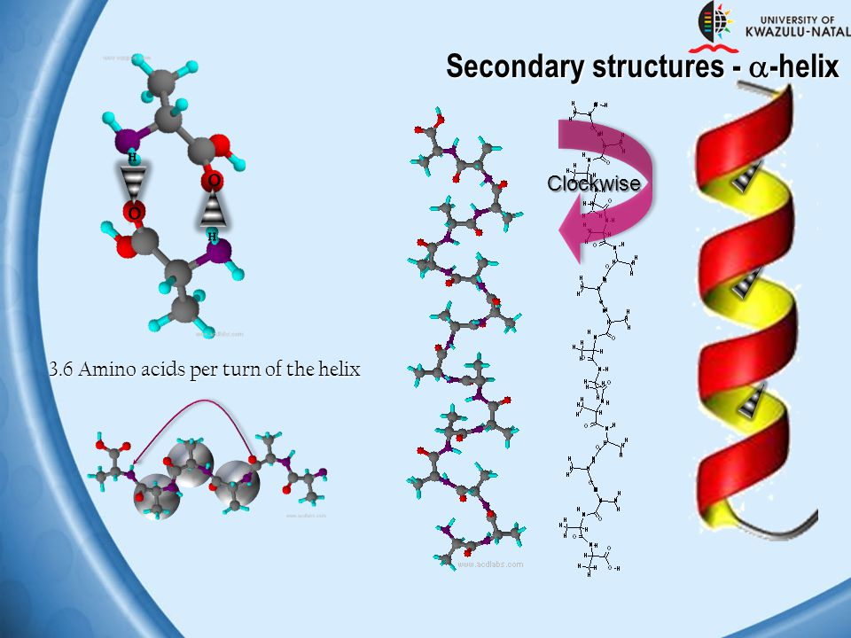 Secondary structures - -helix