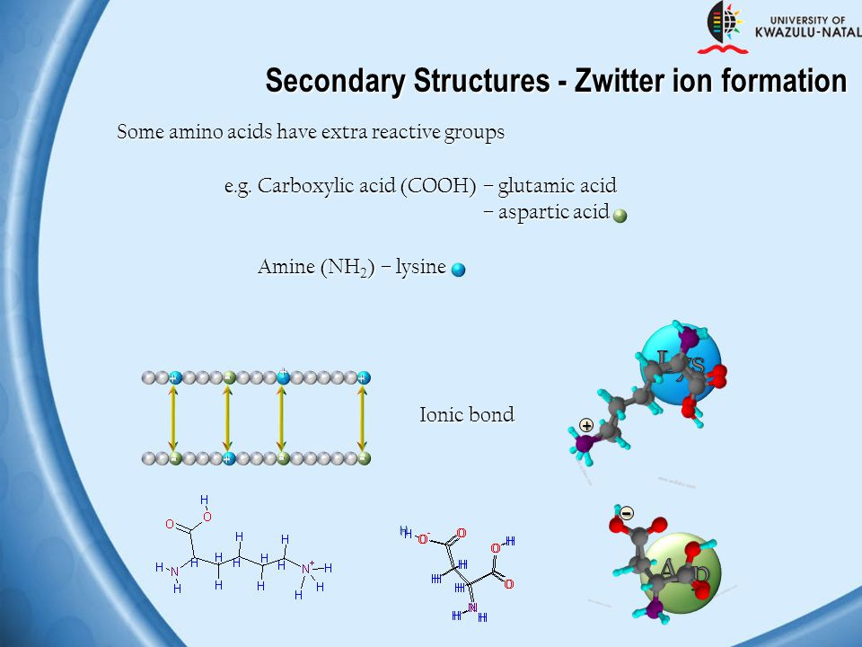- + Secondary Structures - Zwitter ion formation Lys Asp