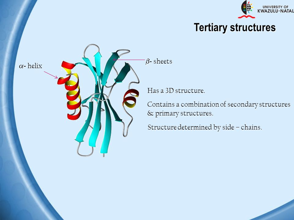 Tertiary structures - sheets - helix Has a 3D structure.