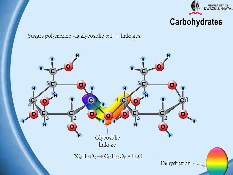 Carbohydrates Sugars polymerize via glycosidic  1–4 linkages. C O 1 2