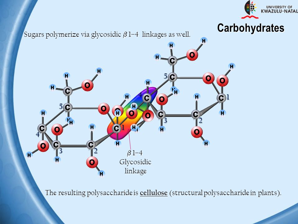 Carbohydrates Sugars polymerize via glycosidic  1–4 linkages as well.